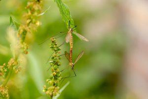 פתרון ליתושים