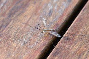 תרסיס נגד יתושים